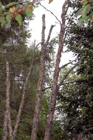 dead-tree-2